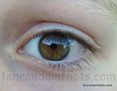 Eye, human, ten random facts
