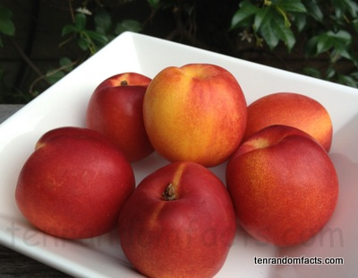 Red Flesh, Yellow Inside, Nectarine, Stonefruit, Ten Random Facts