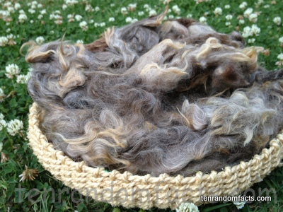 Brown Cream Grey Wool in a basket, Ten Random Facts