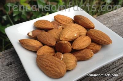 Almonds, Brown, Nuts, Ten Random Facts