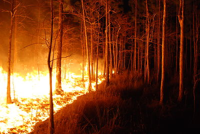 Bushfire, Wildfire, Forest Fire, Fire, No leaves, trees, Ten Random Facts, Free Stock Photos