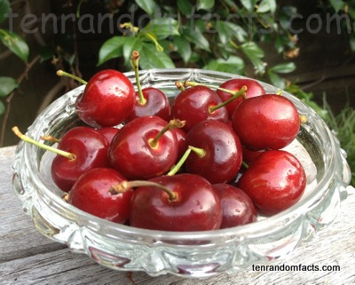 Cherries, Cherry, Sour, Eatable, Many, Lots, Glass, Ten Random Facts