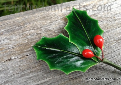 Holly, Illex, Fake, Green Leaves, Red Berries, Single, Ten Random Factsf