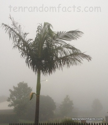 Fog, Tornado, Cause, Australia, Ten Random Facts