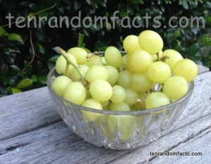 Green grapes, bunches, Stalk, Bowl, Ten Random Facts, Aldi,