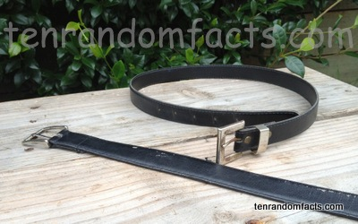 Belt, Black, two, Curled, Straight, School, Gold, Silver buckle, Ten Random Facts