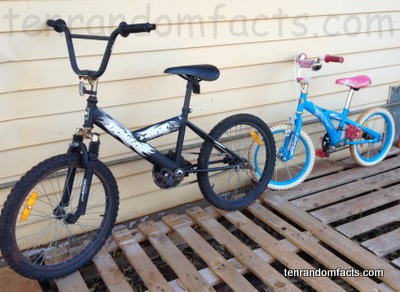 Bicycle, black, blue, pink, white, girl, boy, two, double, chain, parts, full, row, Ten Random Facts, Australia