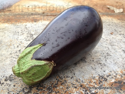 Eggplant, Purple, Fat Long, Black, One, Single, Australia, Vegetable, Ten Random Facts