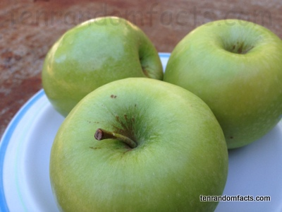 Granny Smith Apple Normal, One, Shiny, Plain, stalk, good, Ten Random Facts, Australia, Three