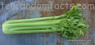 Celery, Stick, Long, Leafy, Green, Vegetation, Australia, Ten Random Facts