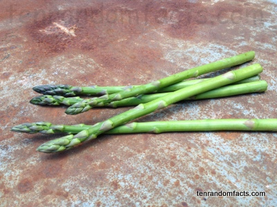 Asparagus, Green, Long, Sticks, Multiple, Spears, Lily, Ten Random Facts, Australia, Vegetable
