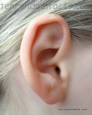 Ear, Pink, White, One, Girl, Child, Blond, Ten Random Facts, Organ, Body