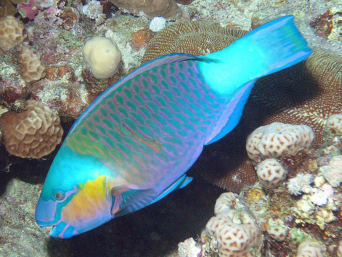 Parrotfish - Ten Random Facts
