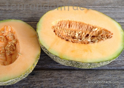 Rockmelon Ten Random Facts The humble cantaloupe may not get as much respect as other fruits, but it should. rockmelon ten random facts
