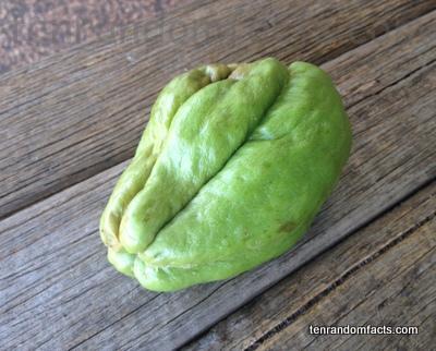 Choko, Green, Gourd, Vegetable, Australian, Wrinkled, Ten Random Facts, Chayote