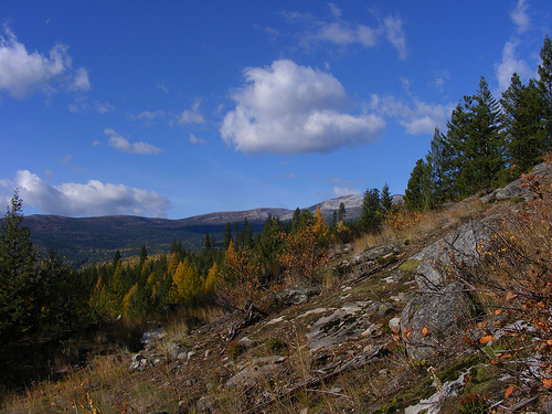 Selkirk Mountain, Scenic, America, Ten Random Facts, Trees, Country, Range