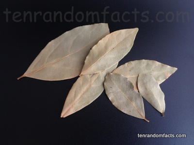 Bayleaf, Leaf, Culinary, Bay, Ten Random Facts, Flavour, Dried, Plant