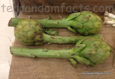 Artichoke, Green, Vegetable, Trivia, Ten Random Facts, Food, Stalks