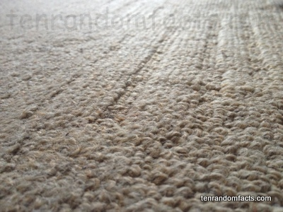 Carpet, Invention, Trivia, Ten Random Fats, Rug, White, Cream, Synthetic