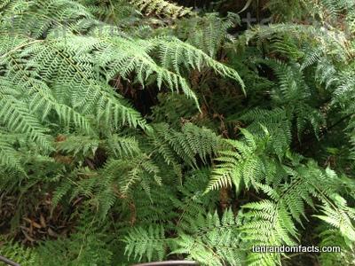 False Bracken, Fern, Green, Vegetation, Rainforest, Australia, Leaves, Museum,