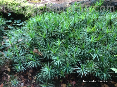 Giant Moss, Large, Plant, Vegetation, Australia, New Zealand, Grass, Melbourne
