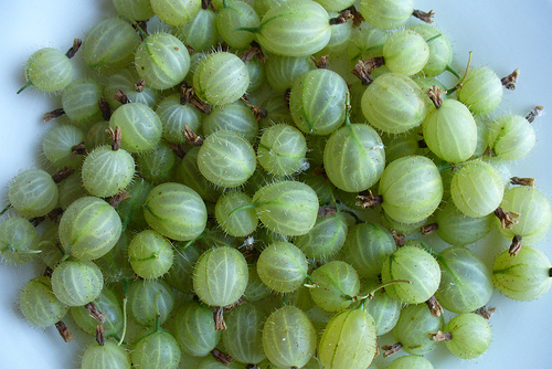 Gooseberry, Fruit, Trivia, Ten Random Facts, Green, Berry, Culinary, Pile, Fresh