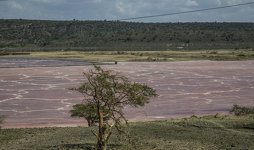 Lake Magadi, Trivia, Ten Random Facts, Pink, Kenya, Africa, Salt, Water