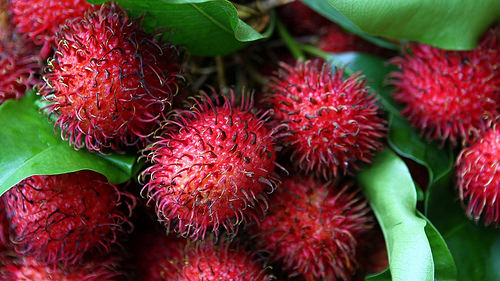 Rambutan, Red, Fruit, Spiky, Trivia, Food, Culinary, Ten Random Facts