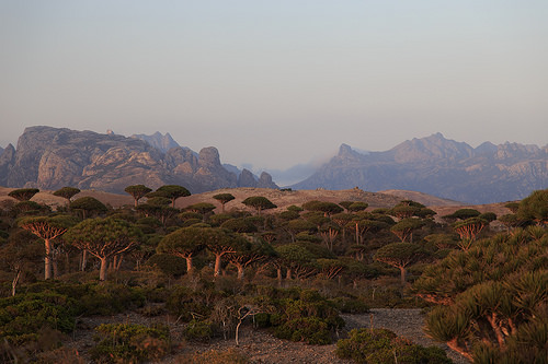 Socotra,Trivia, Ten Random Facts, Island, Misty, Vegetation, Plant, Place, Alien, Exotic, Yemen